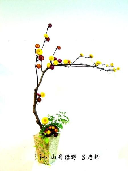 麥稈菊之美  蔓梅擬.jpg