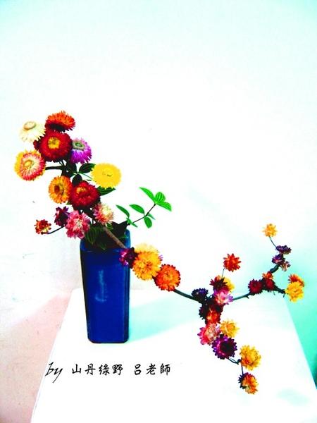 麥稈菊之美 blue.jpg