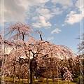 03.26 小石川後樂園