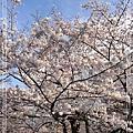 04.01 代々木公園