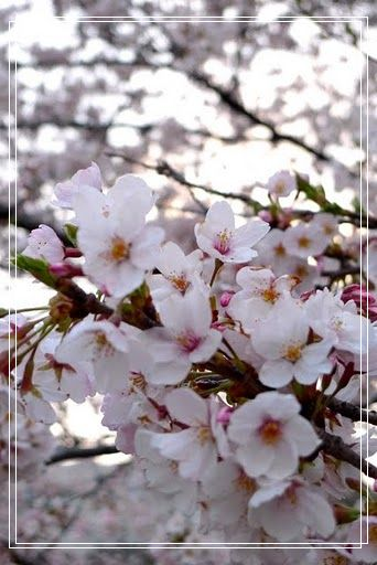 04.03 隅田川公園