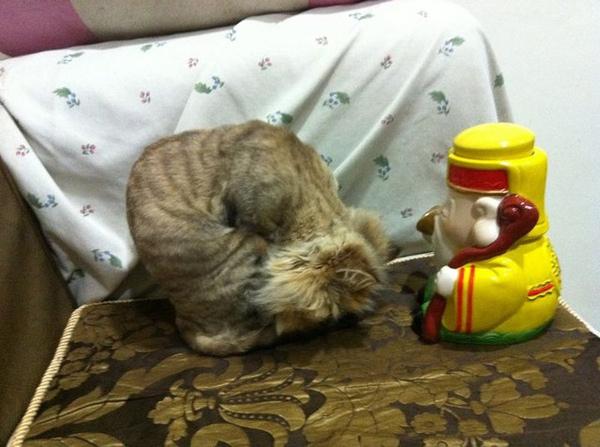 獨家..拜神的貓咪