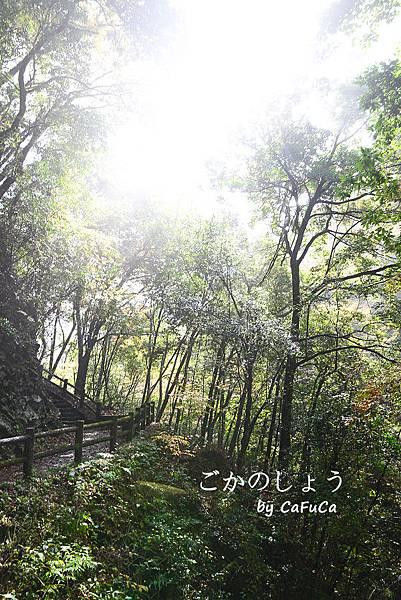 DSC_3854-1-600.jpg