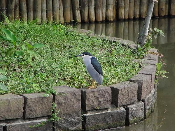 971129植物園的鳥.JPG