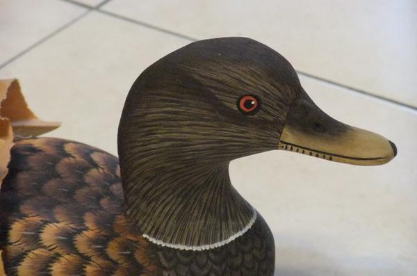 印尼木頭鴨2.JPG