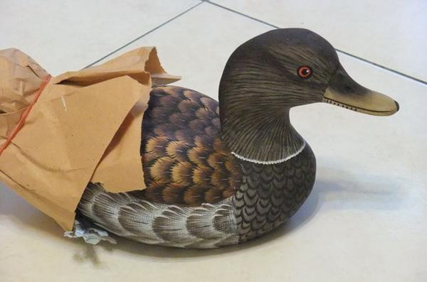 印尼木頭鴨.JPG