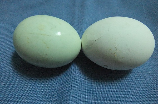 20100525 02與雞蛋的比較.JPG