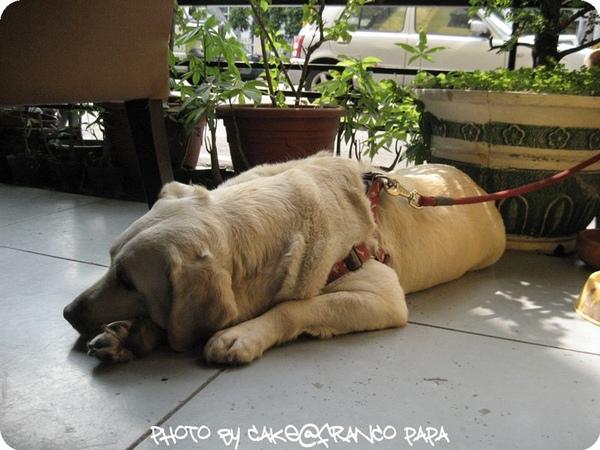 FrancoPaPa2009.4.14 052.jpg