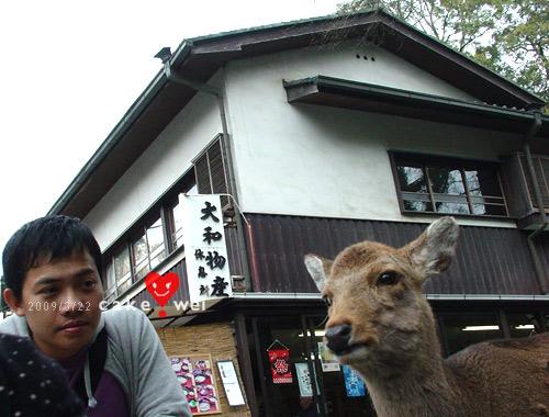 奈良_50.jpg