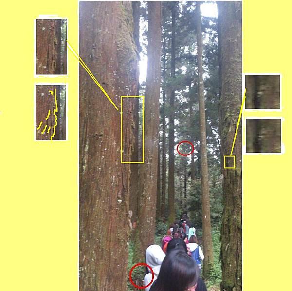 08 樹裡的半張臉放大.JPG