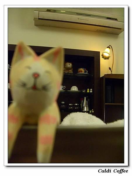 咖啡機上的貓3.JPG