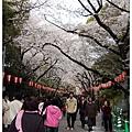 上野公園櫻花.JPG