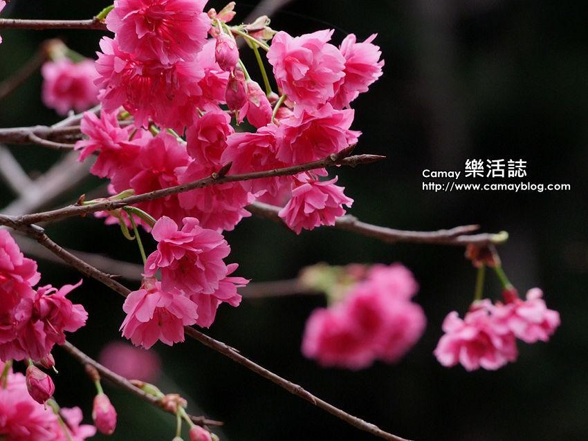 DSCF9708_副本