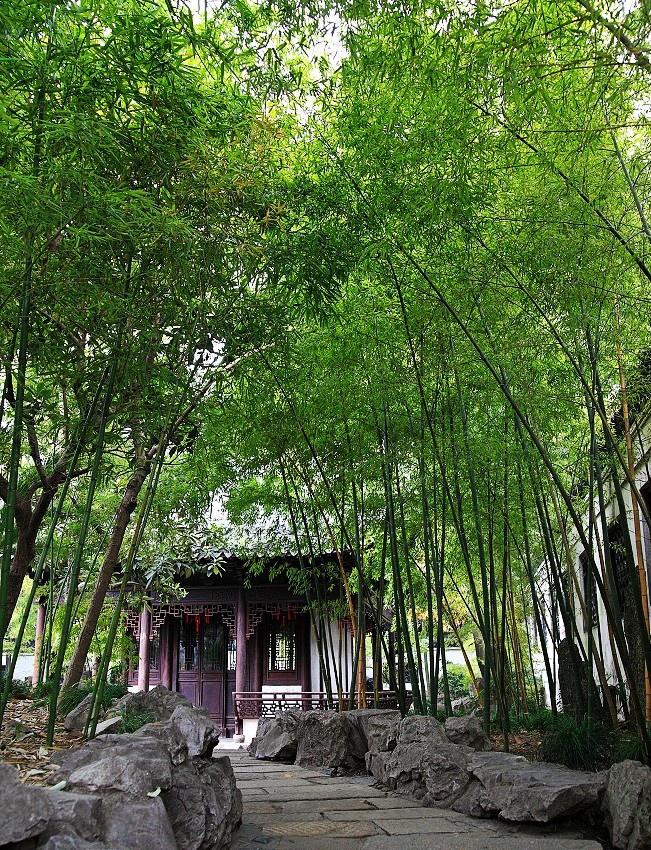 中國上海-57.jpg