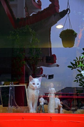tn_03-IMG_7036-1al 貓的心事.jpg