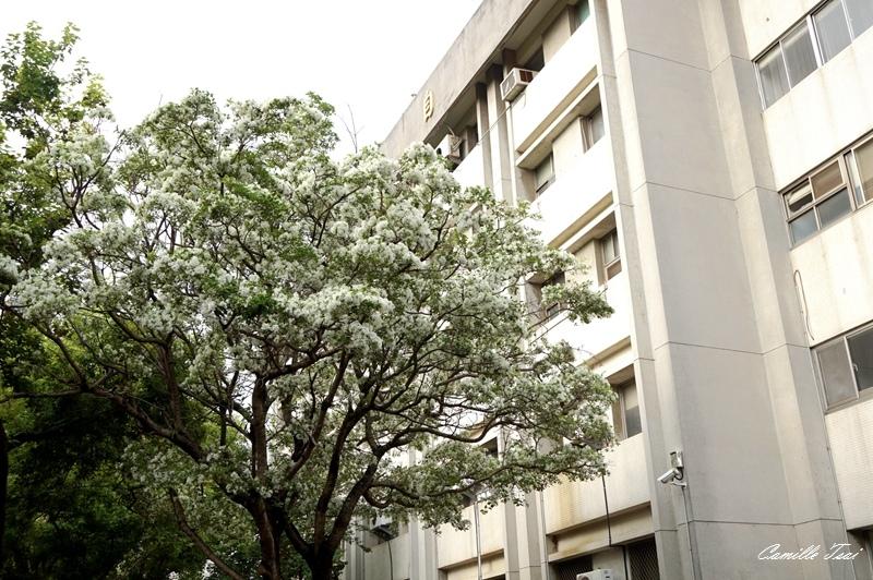 DSC02357.jpg