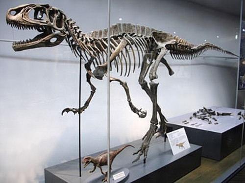 福井縣挖掘恐龍骨骼