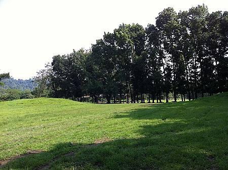 超大的草地