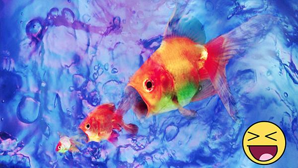 一魚三吃.png