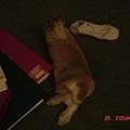 哈哈很悠閒的躺著...大家請忽略旁邊的那隻襪子