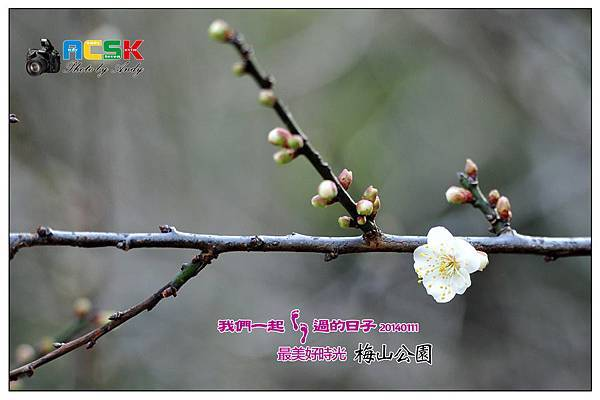 DSC_6163.jpg