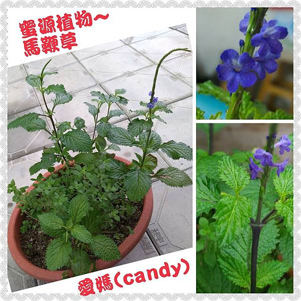 PhotoGrid_1517279375694.jpg