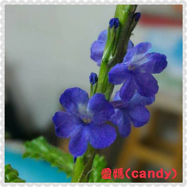 PhotoGrid_1517279532095.jpg