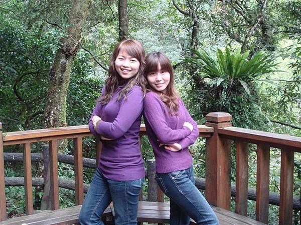 紫色雙胞胎