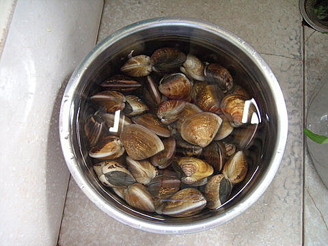蛤蜊們...準備被煮投胎當快樂天使喔.
