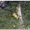 (刺蛾科)刺蛾的幼蟲