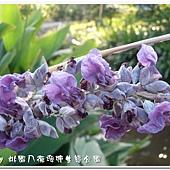 (竹芋科)垂花水竹芋