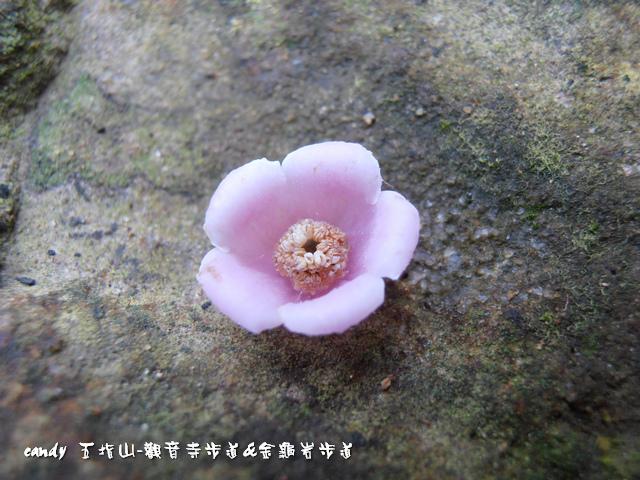 33-水冬瓜的花