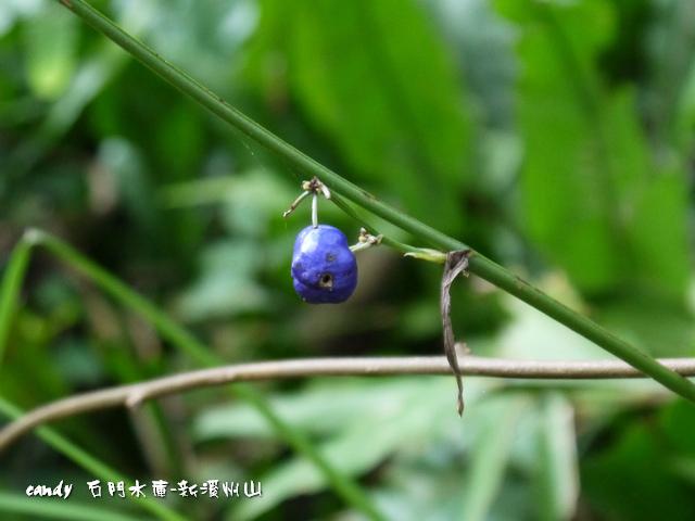69-(百合科)桔梗蘭種子
