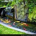 魚池水循環1.jpg