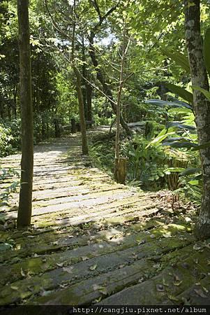 生態池綠色廊道.jpg