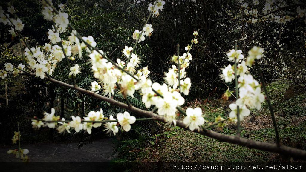 藏酒私密景點-梅花園 (2).jpg