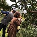 2018春節採果樂_180218_0010.jpg