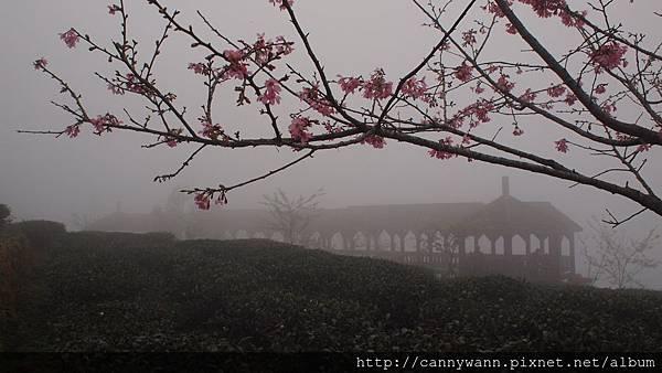 鹿谷鳳凰茶園 (4)