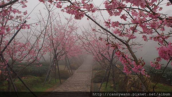 鹿谷鳳凰茶園 (8)
