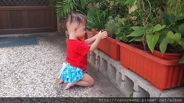 雪莉愛香草植物 (4)