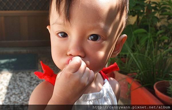雪莉愛香草植物