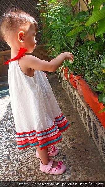 雪莉愛香草植物 (2)