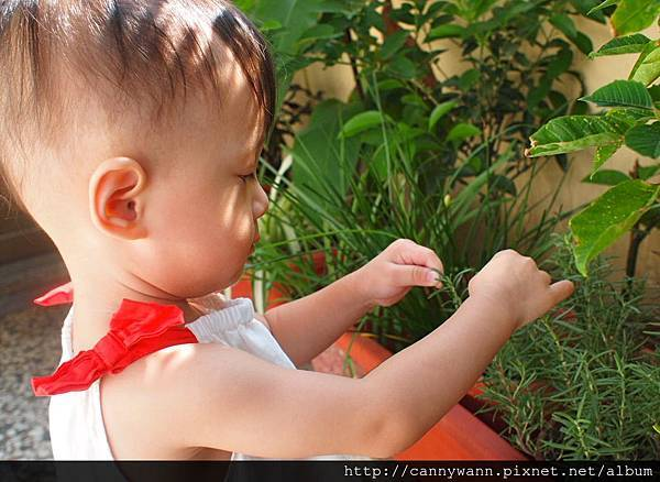 雪莉愛香草植物 (1)