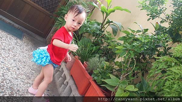 雪莉愛香草植物 (6)