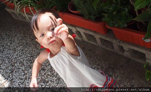 雪莉愛香草植物 (11)