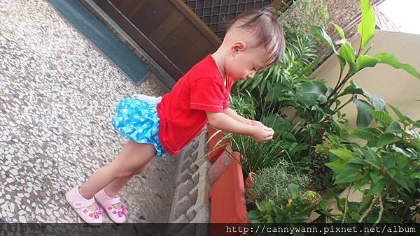 雪莉愛香草植物 (8)