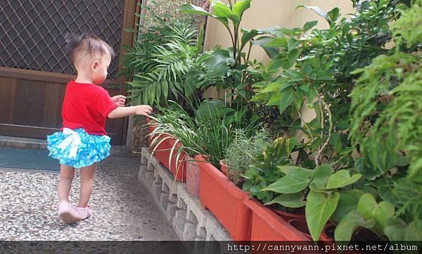 雪莉愛香草植物 (7)