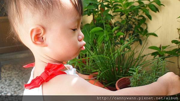 雪莉愛香草植物 (13)