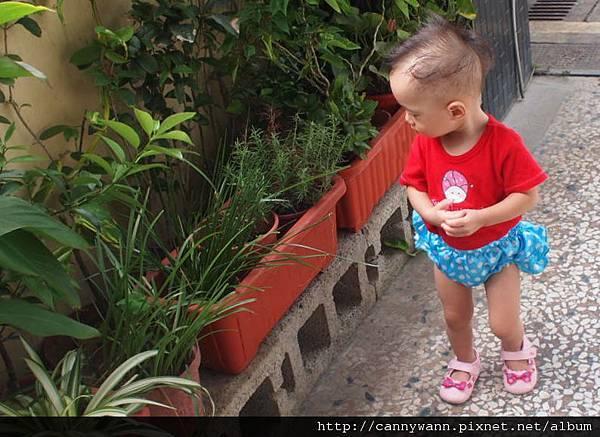 雪莉愛香草植物 (3)