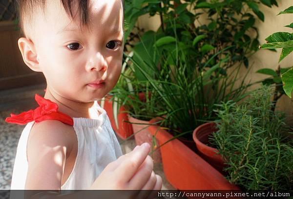 雪莉愛香草植物 (14)